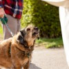 'Majority' of vets asked to euthanise healthy pets